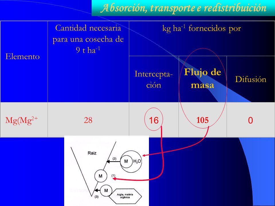 Elemento Cantidad necesaria para una cosecha de 9 t ha -1 kg ha -1 fornecidos por Intercepta- ción Flujo de masa Difusión Mg(Mg 2+ 28 16 105 0 Absorci