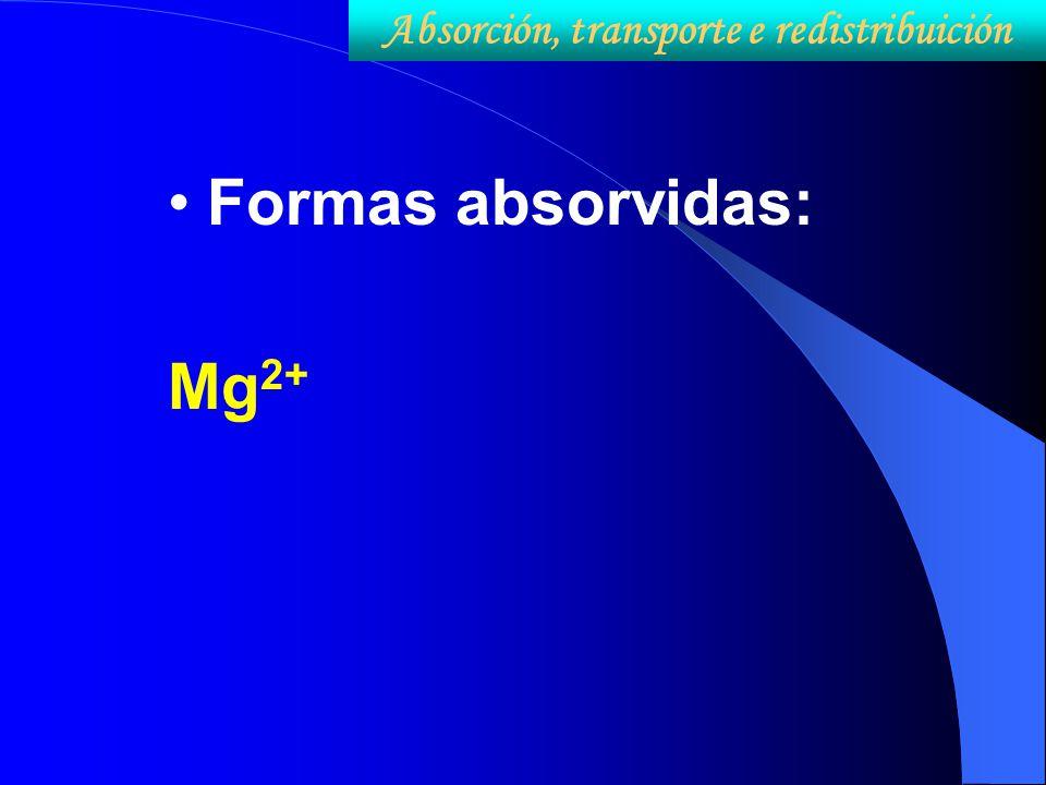 Formas absorvidas: Mg 2+ Absorción, transporte e redistribuición