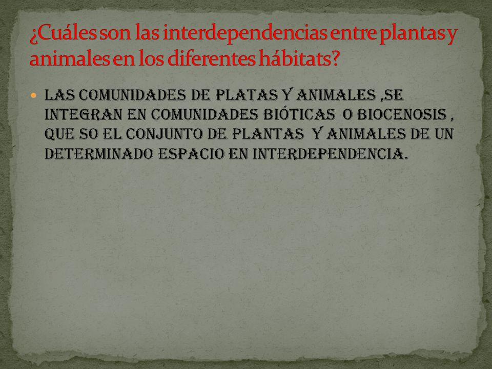 las comunidades de platas y animales,Se integran en comunidades bióticas o biocenosis, que so el conjunto de plantas y animales de un determinado espacio en interdependencia.
