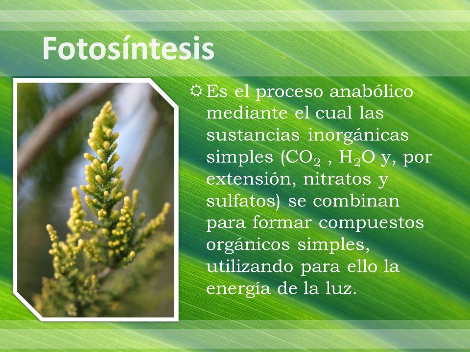 Vegetales eucariontes Algas Cianobacterias Bacterias purpúreas Bacterias verdes del azufre