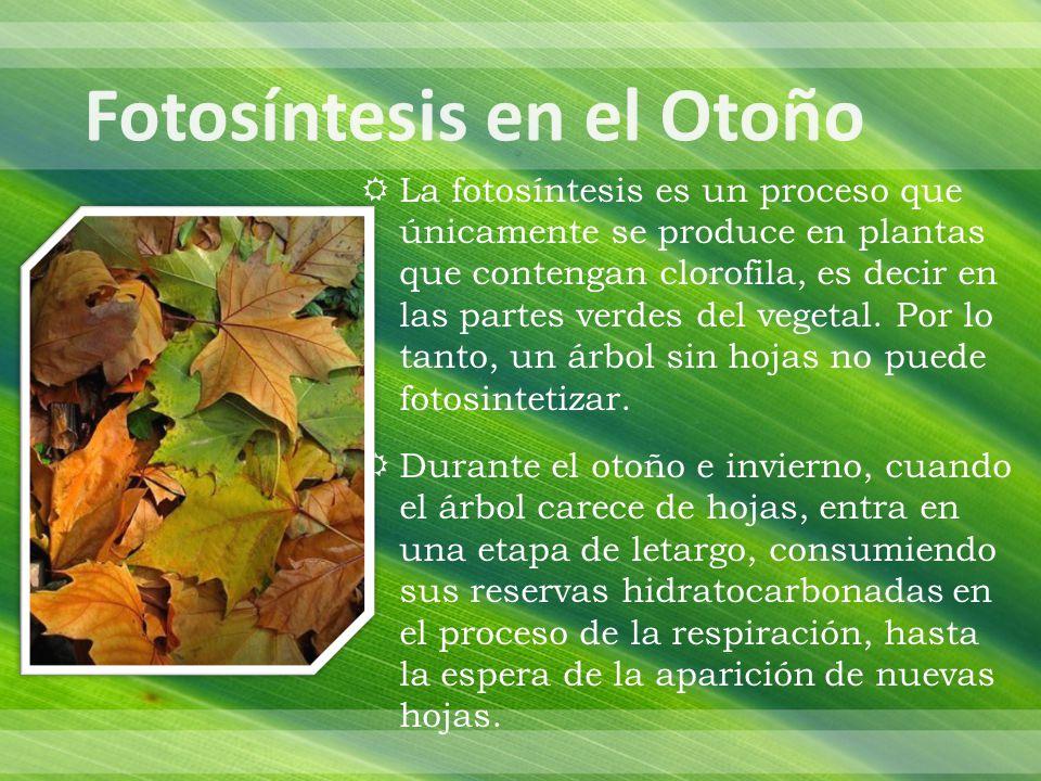 La fotosíntesis es un proceso que únicamente se produce en plantas que contengan clorofila, es decir en las partes verdes del vegetal.
