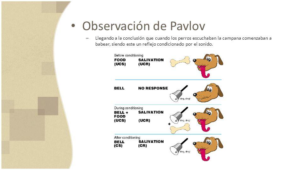 Observación de Pavlov – Llegando a la conclusión que cuando los perros escuchaban la campana comenzaban a babear, siendo este un reflejo condicionado