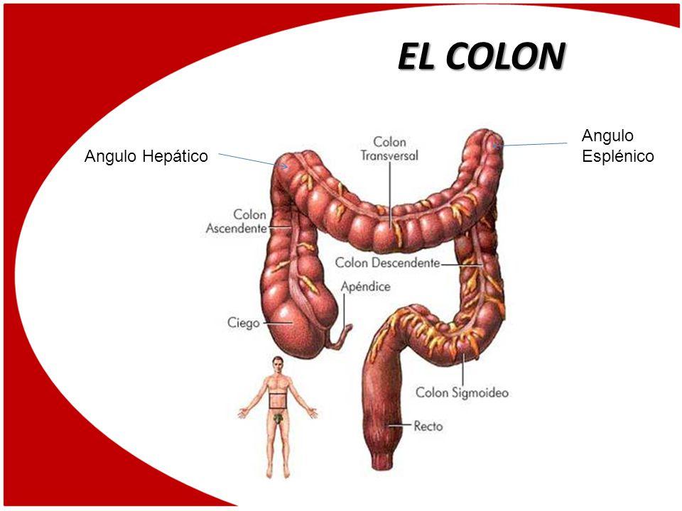 INDICACIONES Atresia del Colon Enfermedad Divertícular Colitis Ulcerosa Colitis Infecciosa Colitis Quística Profunda o Seudomembranosa Colitis Isquémica