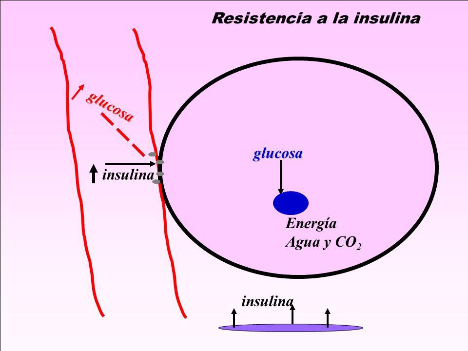 insulina glucosa glucosa Energía Agua y CO 2 Resistencia a la insulina