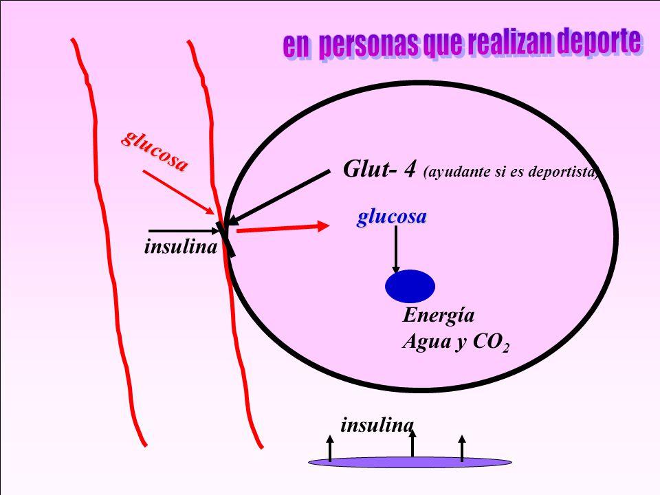 insulina Glut- 4 (ayudante si es deportista) glucosa glucosa Energía Agua y CO 2