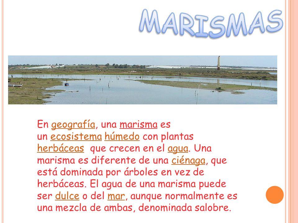 En geografía, una marisma es un ecosistema húmedo con plantas herbáceas que crecen en el agua.