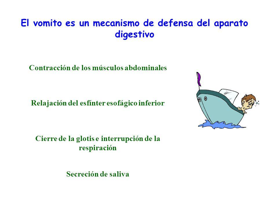 El vomito es un mecanismo de defensa del aparato digestivo Contracción de los músculos abdominales Relajación del esfínter esofágico inferior Cierre d