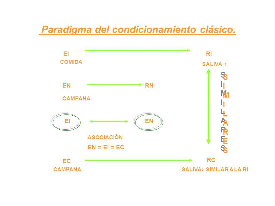 Paradigma del condicionamiento clásico. EI RI COMIDA SALIVA 1 CAMPANA ENRN EIEN ASOCIACIÓN EN = EI = EC EC RC SIMILARESSIMILARES SIMILARESSIMILARES CA