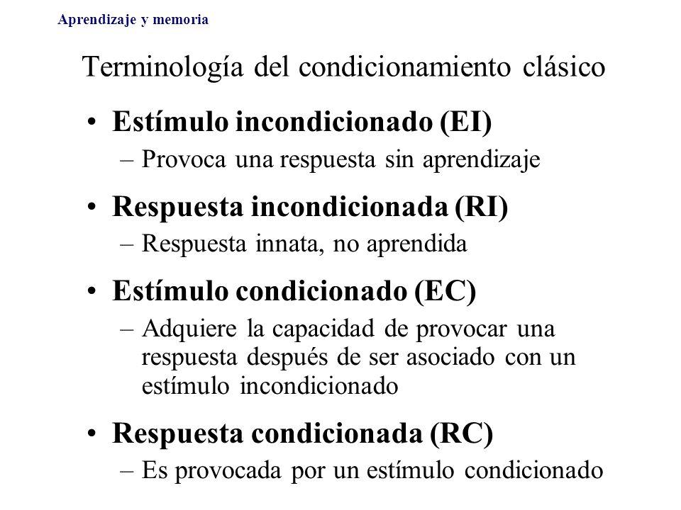 Terminología del condicionamiento clásico Estímulo incondicionado (EI) –Provoca una respuesta sin aprendizaje Respuesta incondicionada (RI) –Respuesta innata, no aprendida Estímulo condicionado (EC) –Adquiere la capacidad de provocar una respuesta después de ser asociado con un estímulo incondicionado Respuesta condicionada (RC) –Es provocada por un estímulo condicionado Aprendizaje y memoria