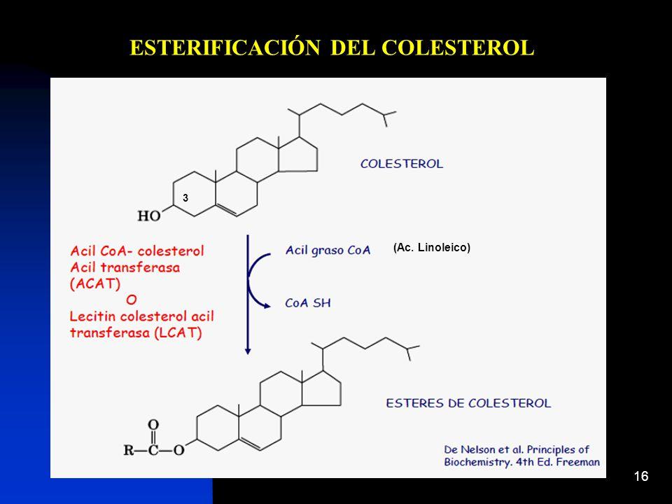 16 ESTERIFICACIÓN DEL COLESTEROL (Ac. Linoleico) 3