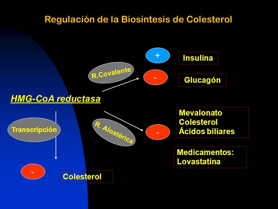 Regulación de la Biosíntesis de Colesterol HMG-CoA reductasa R.Covalente R.