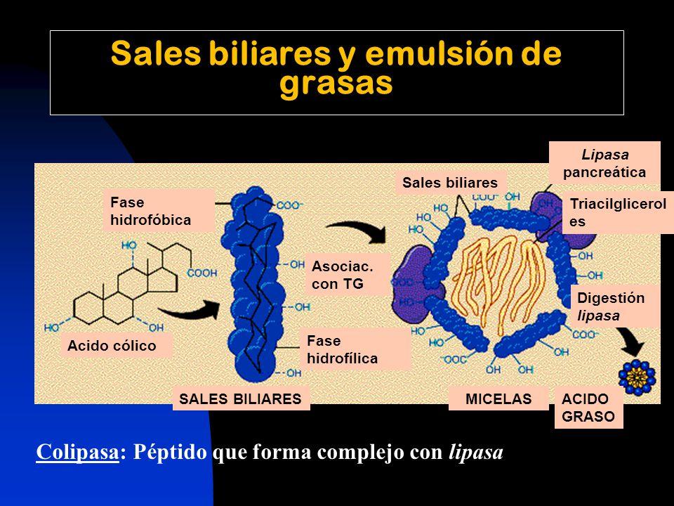 Sales biliares y emulsión de grasas Acido cólico Fase hidrofóbica Fase hidrofílica Asociac.