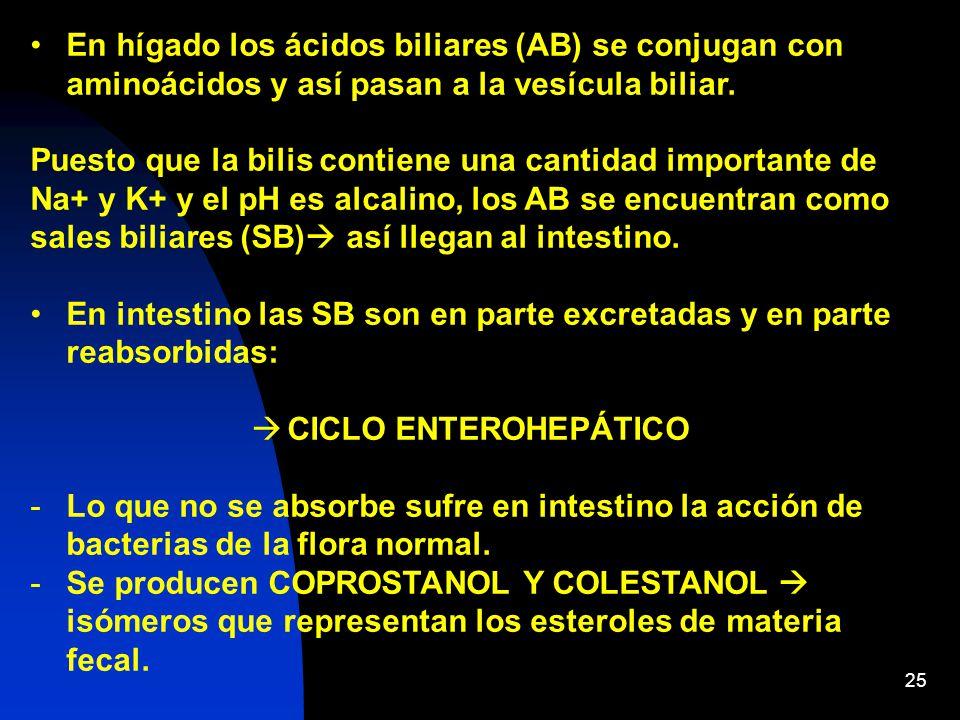25 En hígado los ácidos biliares (AB) se conjugan con aminoácidos y así pasan a la vesícula biliar.