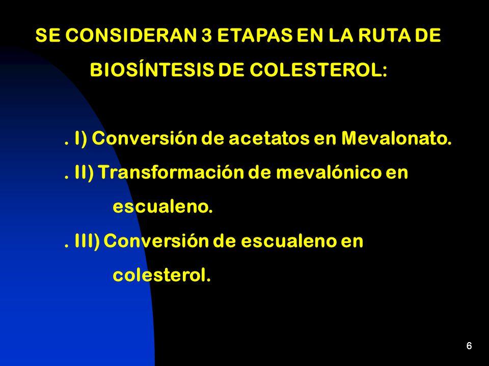 6 SE CONSIDERAN 3 ETAPAS EN LA RUTA DE BIOSÍNTESIS DE COLESTEROL:.