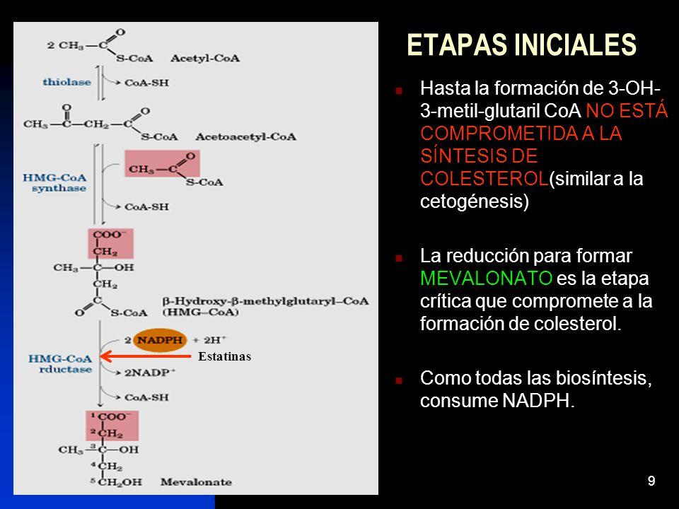 9 ETAPAS INICIALES Hasta la formación de 3-OH- 3-metil-glutaril CoA NO ESTÁ COMPROMETIDA A LA SÍNTESIS DE COLESTEROL(similar a la cetogénesis) La reducción para formar MEVALONATO es la etapa crítica que compromete a la formación de colesterol.