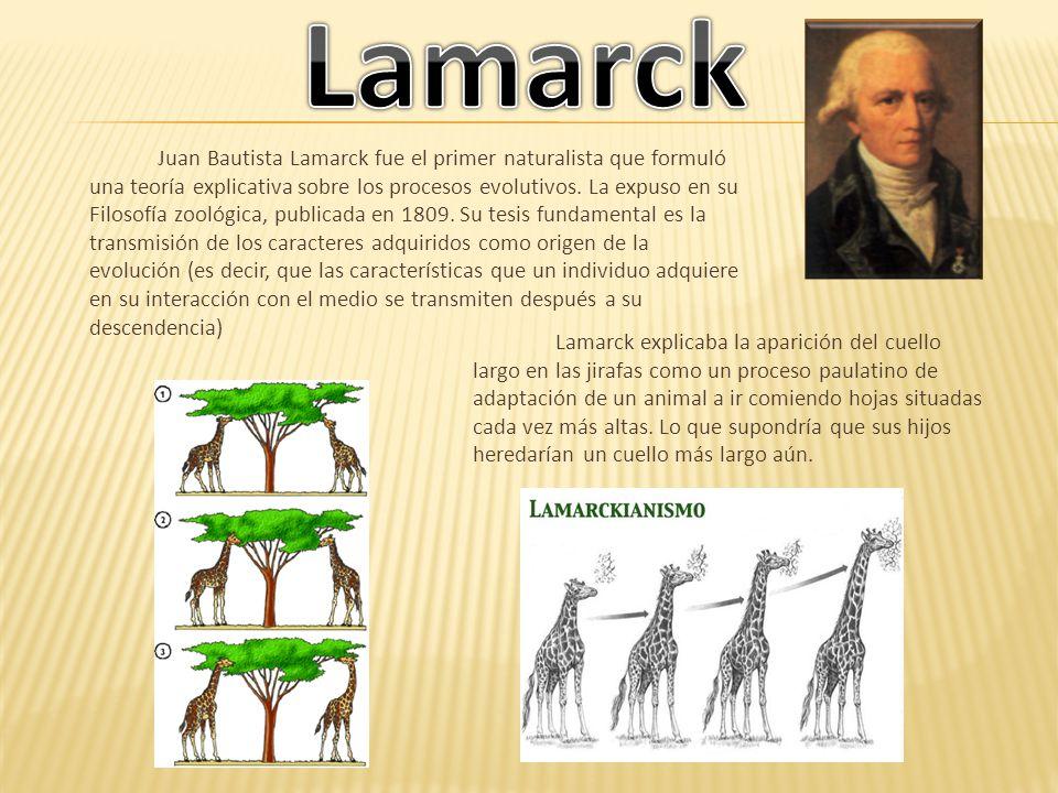 Juan Bautista Lamarck fue el primer naturalista que formuló una teoría explicativa sobre los procesos evolutivos. La expuso en su Filosofía zoológica,