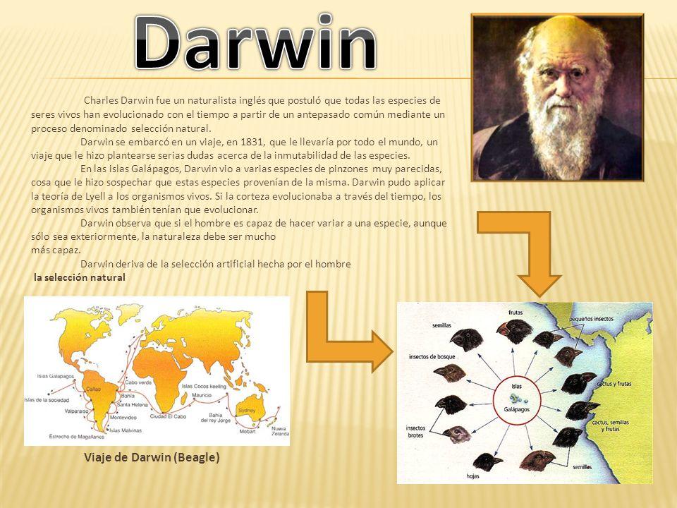 Charles Darwin fue un naturalista inglés que postuló que todas las especies de seres vivos han evolucionado con el tiempo a partir de un antepasado co