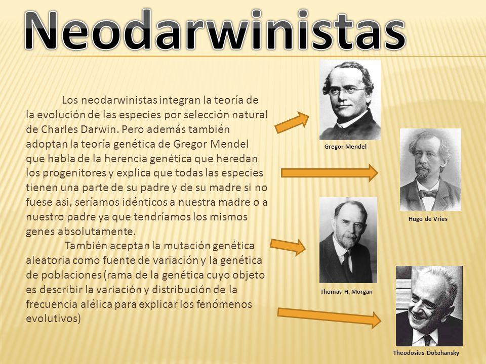 Los neodarwinistas integran la teoría de la evolución de las especies por selección natural de Charles Darwin. Pero además también adoptan la teoría g