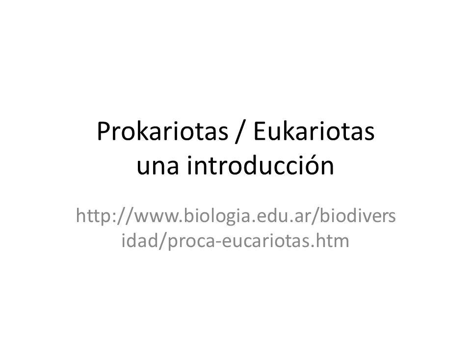 Vamos a comparar Prokariotas / Eukariotas Usando sus computadores deberán encontrar respuesta a las siguientes preguntas Que son: Características Ubicación taxonómica Ejemplos de esos organismos Importancia en la vida real – Enfermedades, – Industria – Genética Preparar un pwp (uno por Prokariotas otro Eukariotas) Entre todos deberemos generar una tabla comparativa