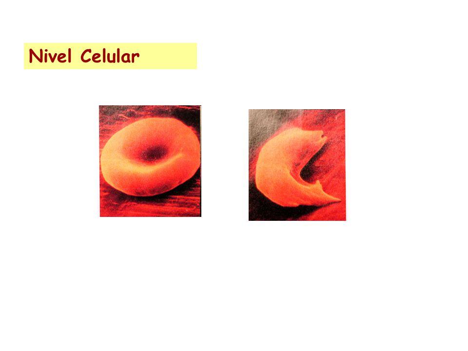 Nivel Celular
