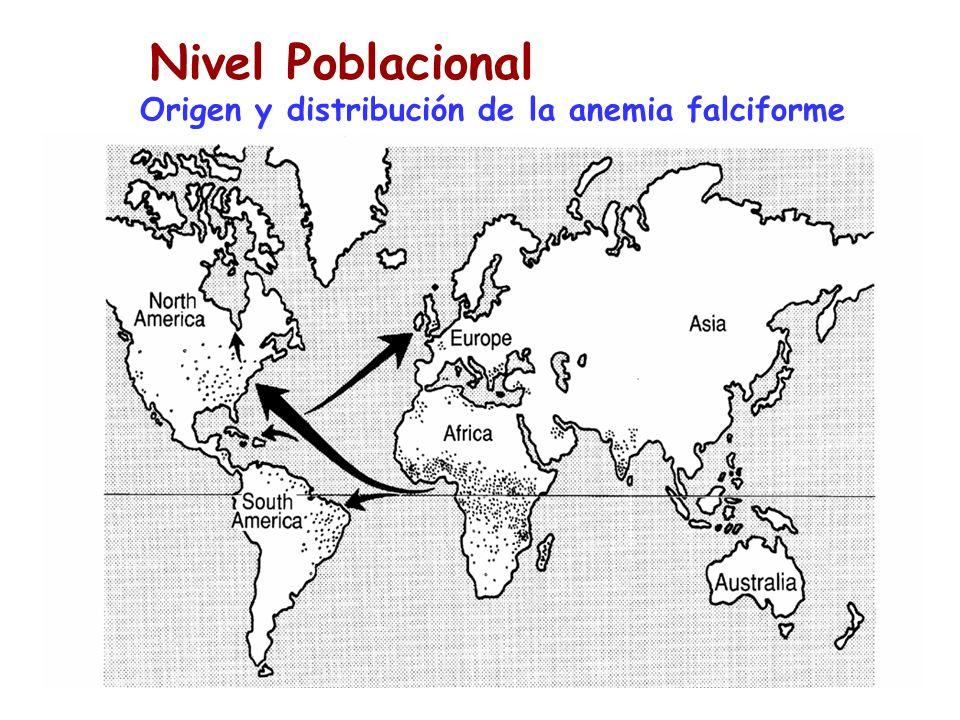 Poblaciones Origen y distribución de la anemia falciforme Nivel Poblacional