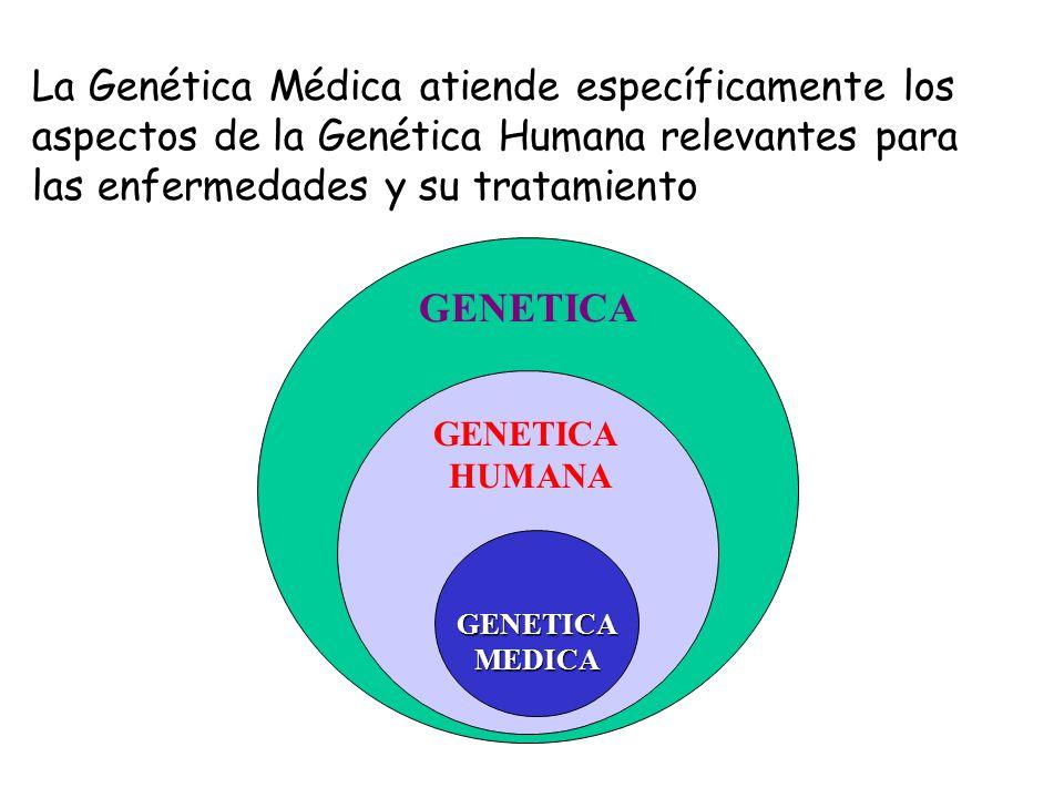 Placa metafásica Cromosomas