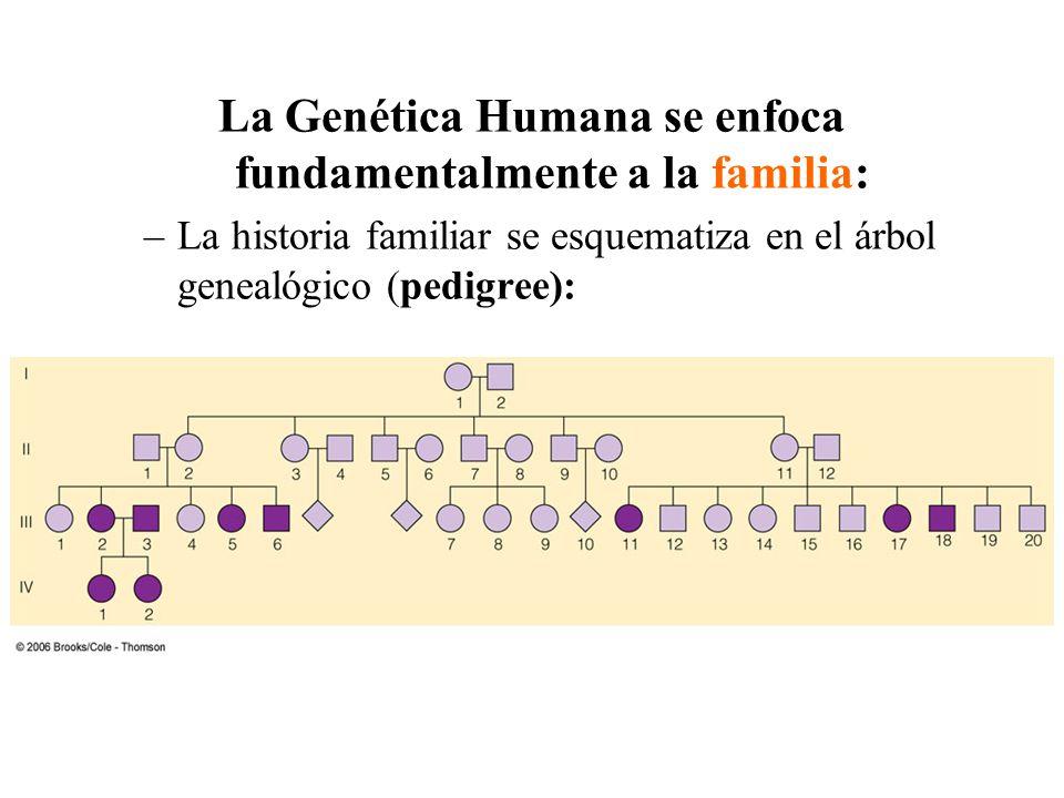 La Genética Humana se enfoca fundamentalmente a la familia: –La historia familiar se esquematiza en el árbol genealógico (pedigree):