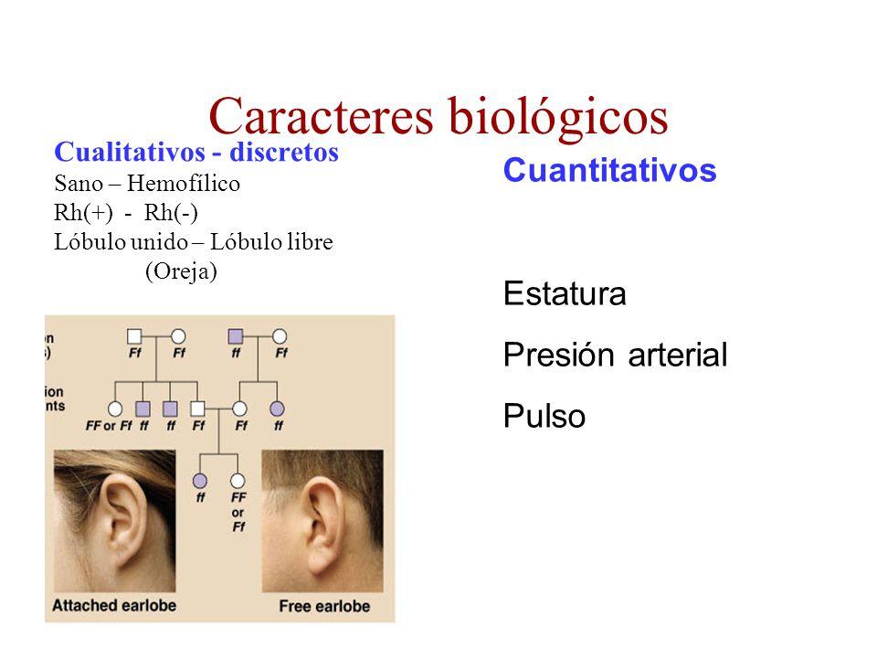 Caracteres biológicos Cualitativos - discretos Sano – Hemofílico Rh(+) - Rh(-) Lóbulo unido – Lóbulo libre (Oreja) Cuantitativos Estatura Presión arte