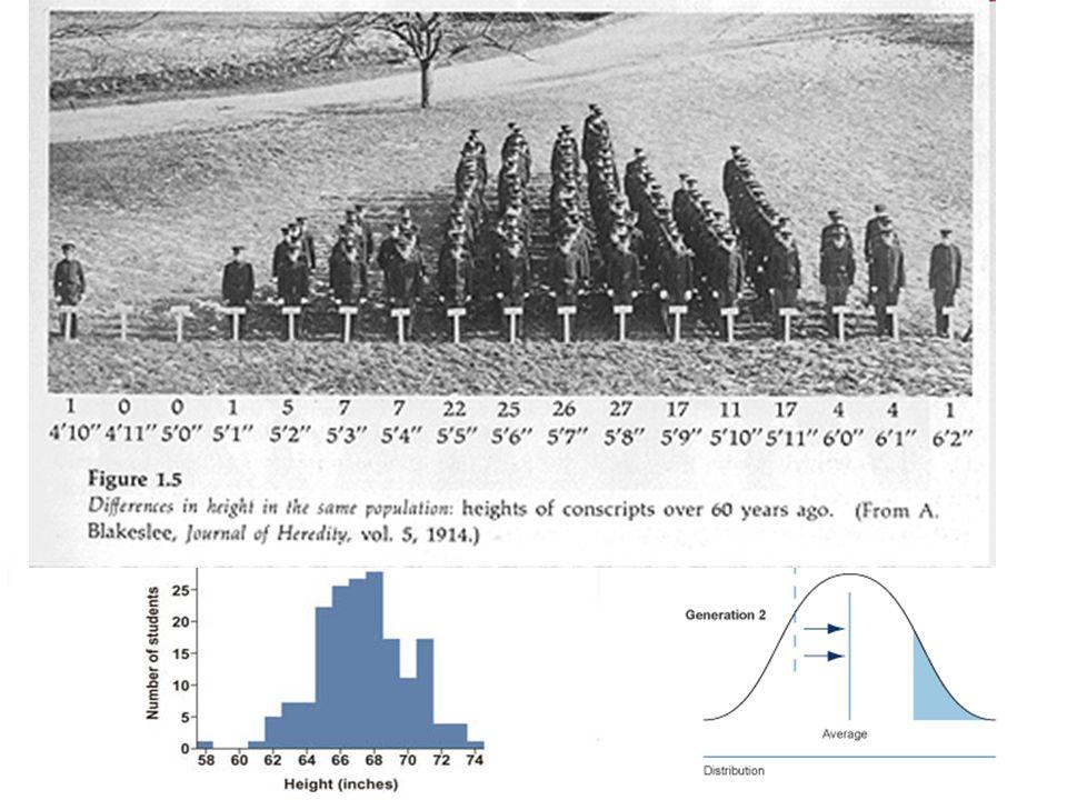 Cariotipo humano: Bandeo G Fórmula cromosómica: 46, XY