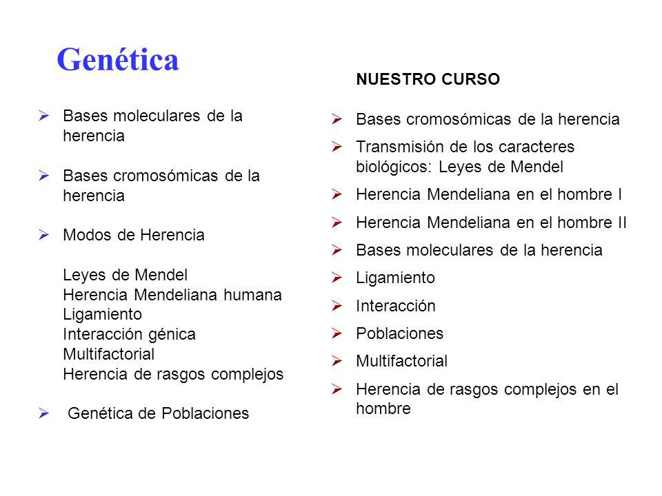 Genética NUESTRO CURSO Bases cromosómicas de la herencia Transmisión de los caracteres biológicos: Leyes de Mendel Herencia Mendeliana en el hombre I
