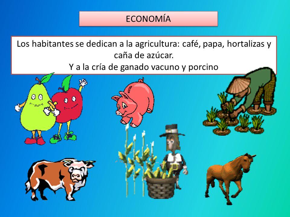 ECONOMÍA Los habitantes se dedican a la agricultura: café, papa, hortalizas y caña de azúcar. Y a la cría de ganado vacuno y porcino