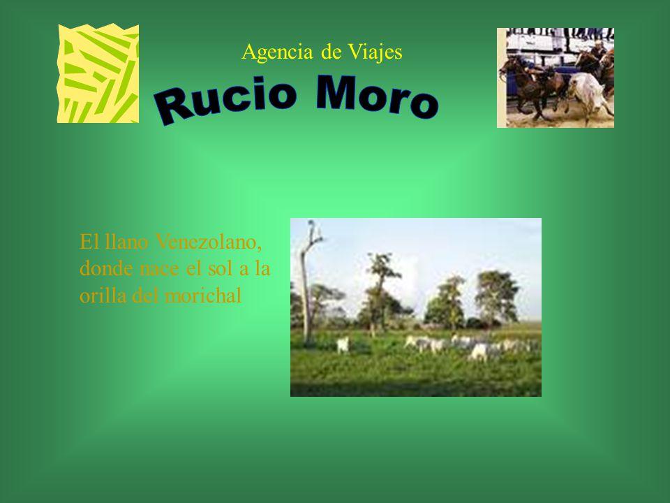 Agencia de Viajes El llano Venezolano, donde nace el sol a la orilla del morichal