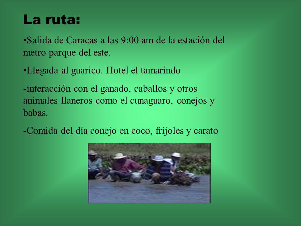 La ruta: Salida de Caracas a las 9:00 am de la estación del metro parque del este. Llegada al guarico. Hotel el tamarindo -interacción con el ganado,