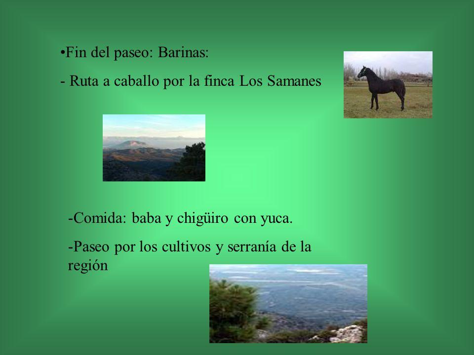 Fin del paseo: Barinas: - Ruta a caballo por la finca Los Samanes -Comida: baba y chigüiro con yuca. -Paseo por los cultivos y serranía de la región