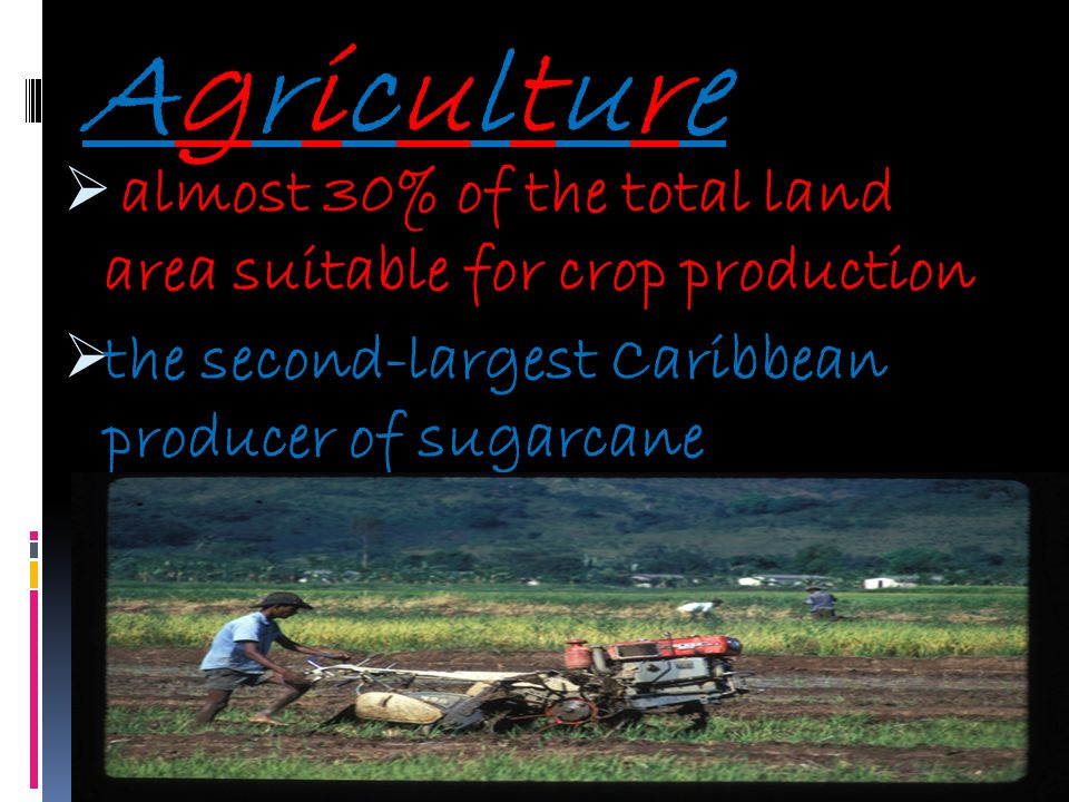 almost 30% of the total land area suitable for crop production the second-largest Caribbean producer of sugarcane AgricultureAgriculture
