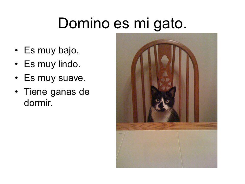 Domino es mi gato. Es muy bajo. Es muy lindo. Es muy suave. Tiene ganas de dormir.