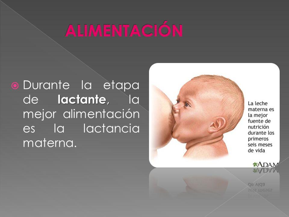 lactante, Durante la etapa de lactante, la mejor alimentación es la lactancia materna.