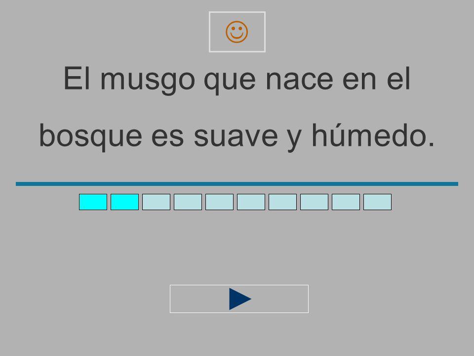 El_musgo_que_nace_en_el_ bosque_es_suave_y_húmed _ z x c v b n m a s d f g h j l ñ ´ q e r t y u i o p