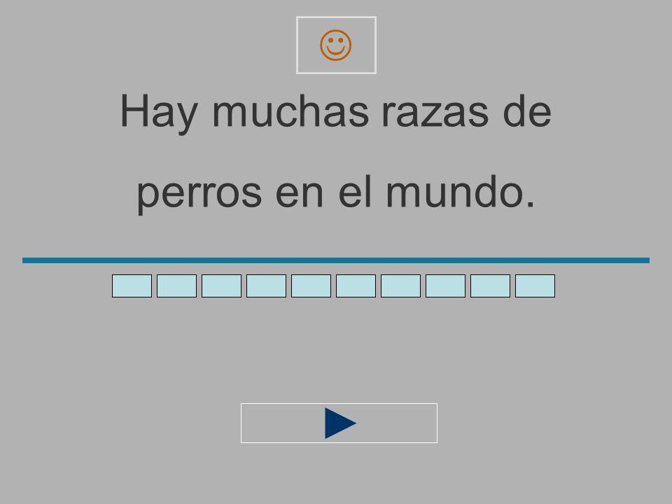Hay_muchas_razas_de_ perros_en_el_mund _ z x c v b n m a s d f g h j l ñ ´ q e r t y u i o p