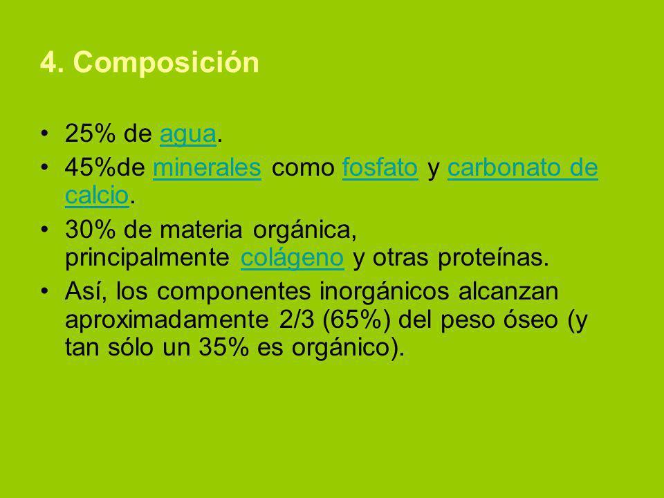 4. Composición 25% de agua.agua 45%de minerales como fosfato y carbonato de calcio.mineralesfosfatocarbonato de calcio 30% de materia orgánica, princi