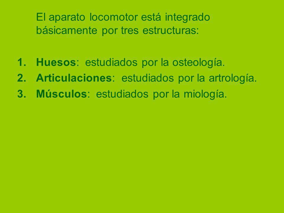 El aparato locomotor está integrado básicamente por tres estructuras: 1.Huesos: estudiados por la osteología.
