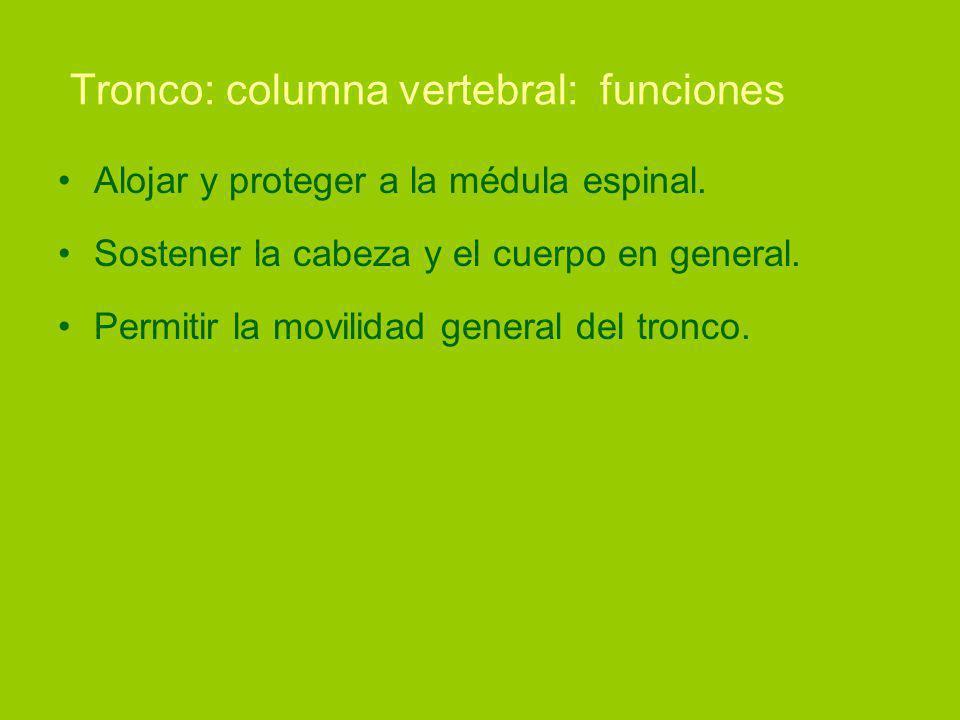 Tronco: columna vertebral: funciones Alojar y proteger a la médula espinal.