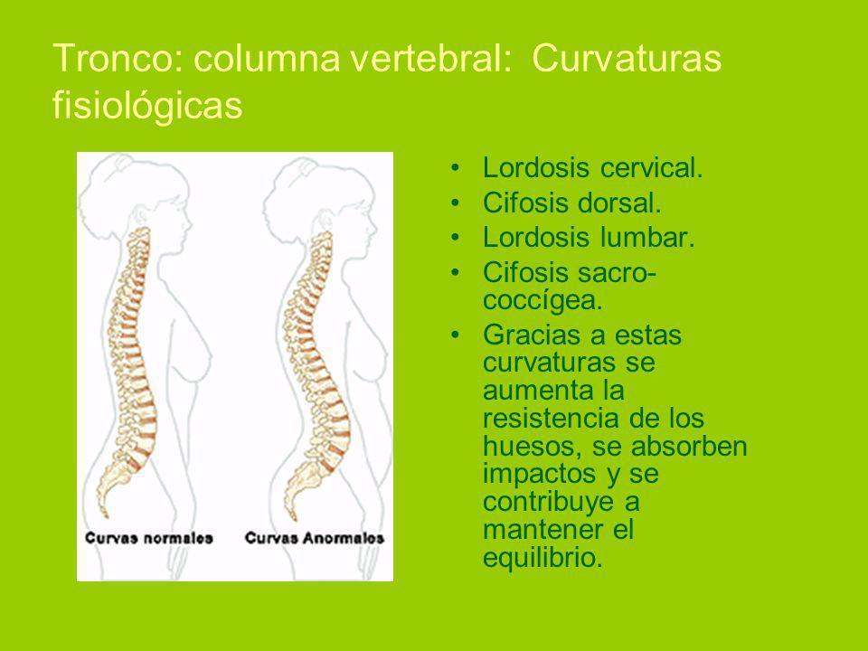 Tronco: columna vertebral: Curvaturas fisiológicas Lordosis cervical.