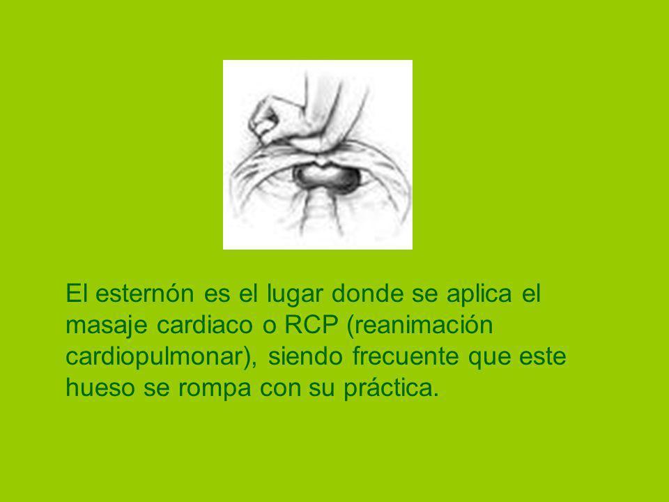 El esternón es el lugar donde se aplica el masaje cardiaco o RCP (reanimación cardiopulmonar), siendo frecuente que este hueso se rompa con su práctica.