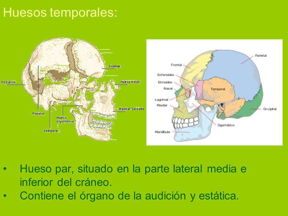 Huesos temporales: Hueso par, situado en la parte lateral media e inferior del cráneo.