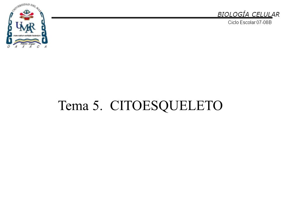 BIOLOGÍA CELULAR Ciclo Escolar 07-08B Tema 5. CITOESQUELETO
