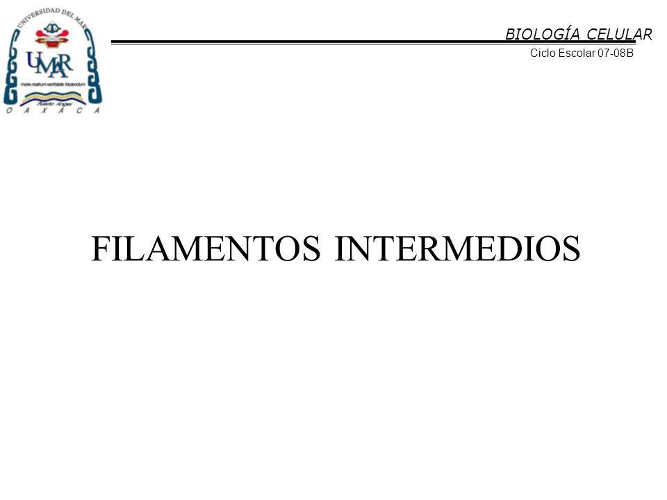 BIOLOGÍA CELULAR Ciclo Escolar 07-08B FILAMENTOS INTERMEDIOS