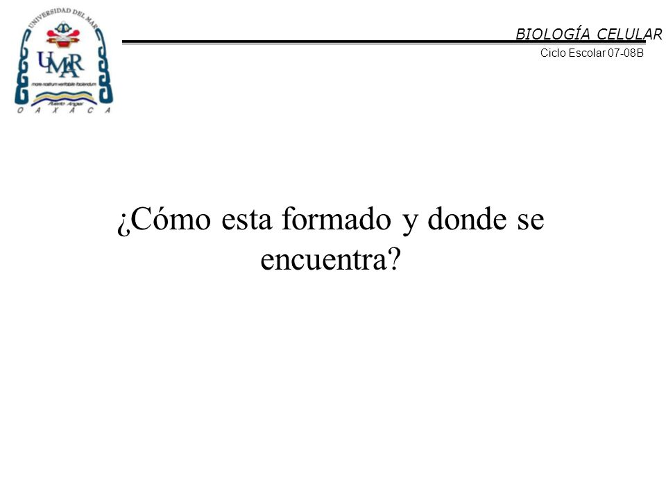 BIOLOGÍA CELULAR Ciclo Escolar 07-08B http://images.google.com.ar/imgres?imgurl=http://www.anatomiahumana.ucv.cl/morfo1/foto1/contraccion.JPG&imgrefurl=http://www.anatomiahumana.ucv.cl/efi/mo dulo11.html&h=531&w=537&sz=40&hl=es&start=39&um=1&tbnid=iutXh7lw5DqBJM:&tbnh=131&tbnw=132&prev=/images%3Fq%3Dmiosina%26start%3D20%2 6ndsp%3D20%26um%3D1%26hl%3Des%26client%3Dfirefox-a%26rls%3Dorg.mozilla:es-ES:official%26sa%3DN