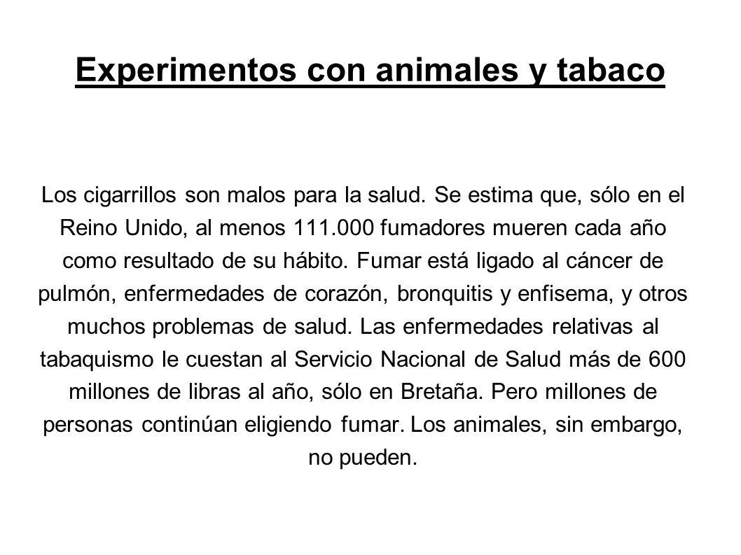 A pesar de esto, miles de animales de todo el mundo sufren y mueren cada año en experimentos sobre tabaquismo e investigación relacionada.
