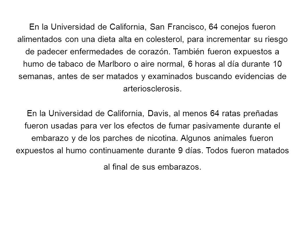En la Universidad de California, San Francisco, 64 conejos fueron alimentados con una dieta alta en colesterol, para incrementar su riesgo de padecer